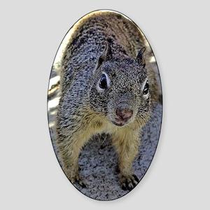 squirrel_sticker Sticker (Oval)