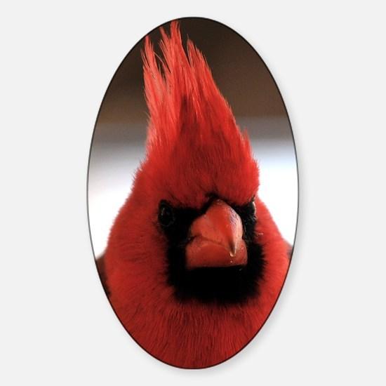 cardinal2_card Sticker (Oval)