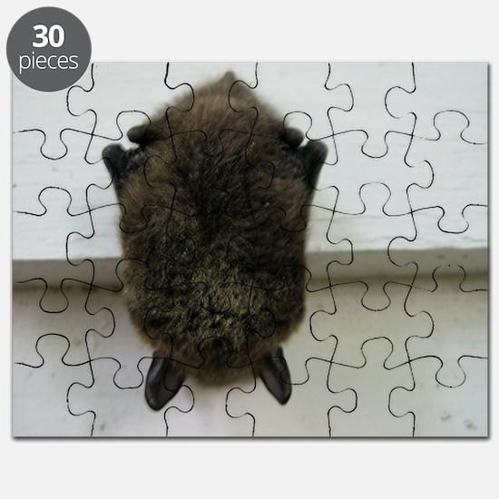 bat, chiroptera Puzzle