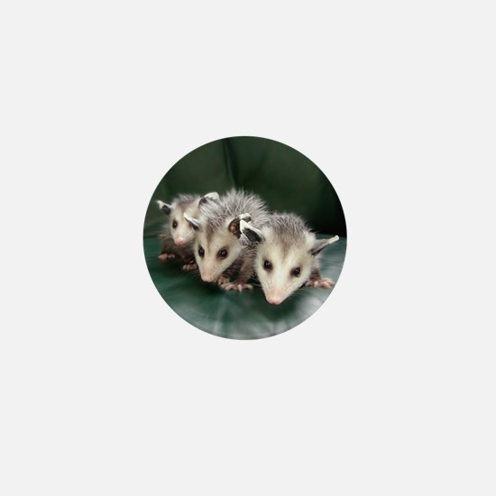 Baby Possum Mini Button