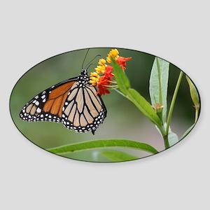 IMG_5308 Sticker (Oval)