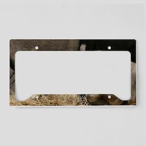 IMG_8127 License Plate Holder