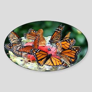 IMG_7966 Sticker (Oval)
