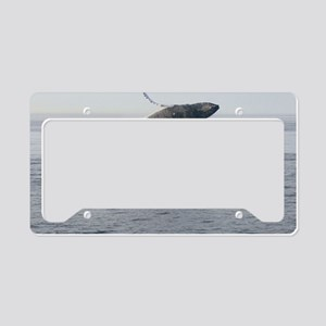 day 3 1183 License Plate Holder