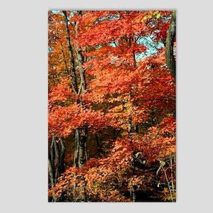 autumn_lgp Postcards (Package of 8)