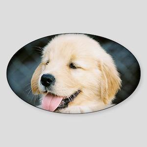 Golden Retriever Puppy Calendar Pri Sticker (Oval)