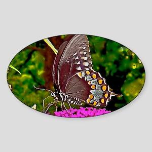 Eastern Black Swallowtail Butterfly Sticker (Oval)