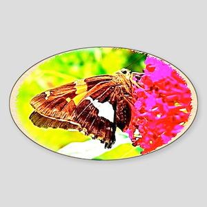 Silver-spotted Skipper Butterfly, C Sticker (Oval)