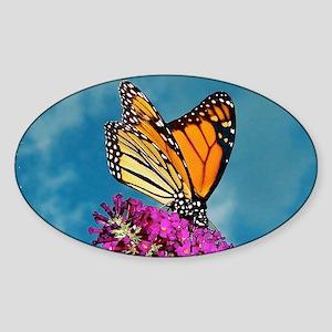 Monarch Butterfly, Calendar, Year A Sticker (Oval)