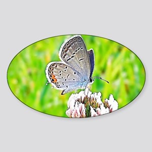 Eastern Tailed Blue Butterfly, Cale Sticker (Oval)