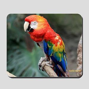 Scarlet Macaw Calendar Mousepad