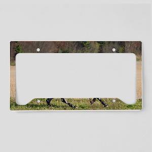 knn_9 License Plate Holder