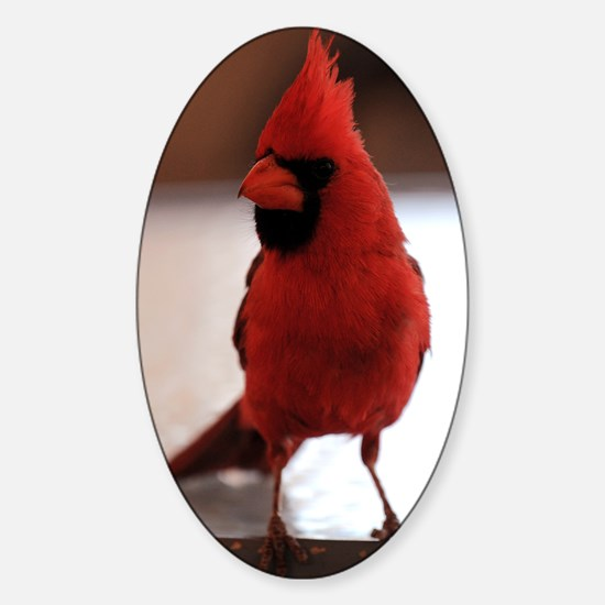 cardinal_lg_framed Sticker (Oval)