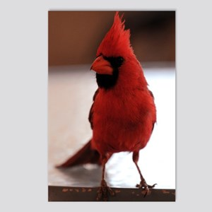 cardinal_lg_framed Postcards (Package of 8)