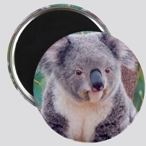 Koala Smile pillow Magnet