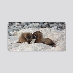 Baby Sea Lions Galapagos Aluminum License Plate