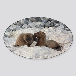 Baby Sea Lions Galapagos Sticker (Oval)
