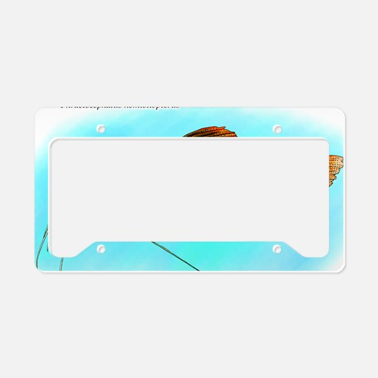 Red-Tailed Catfish License Plate Holder