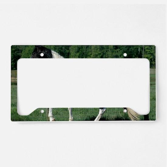 spots_lp License Plate Holder