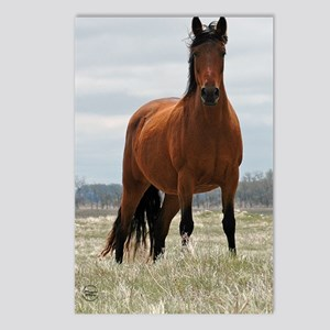 baymare_journal Postcards (Package of 8)