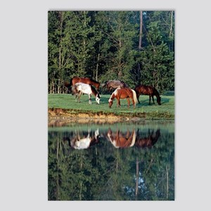 reflection_lgp Postcards (Package of 8)