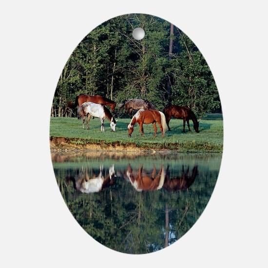 reflection_sticker Oval Ornament