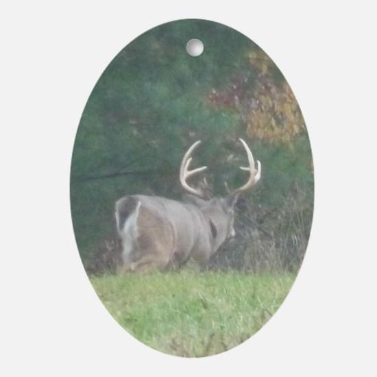 Buck2.41x4.42 Oval Ornament