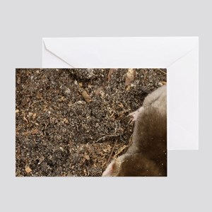 Eastern Mole searching for food (Sca Greeting Card