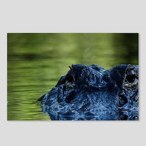 American alligator (Allig Postcards (Package of 8)