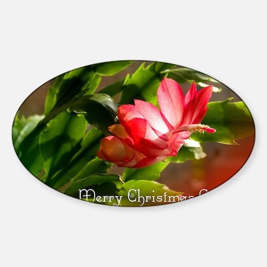 Christmas Cactus Cards Sticker (Oval)