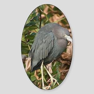 Little Blue Heron (Egretta caerulea Sticker (Oval)