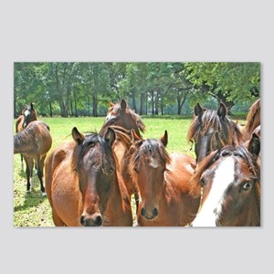 Horses on horse farm Ocal Postcards (Package of 8)