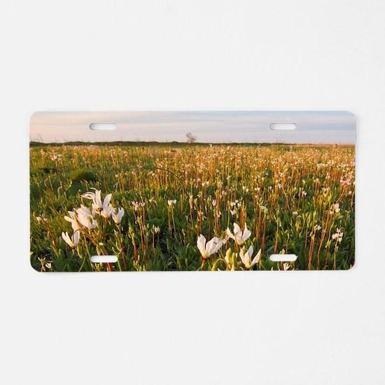 Shooting star wildflowers c Aluminum License Plate