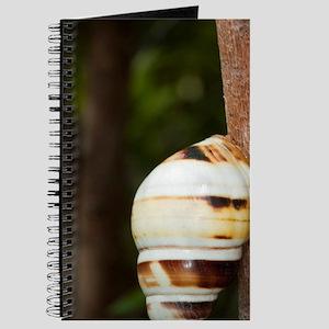 Florida Tree Snail, Liguus fasciatus, Ever Journal