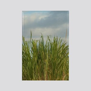 Sugar cane field. (RF)uthwest coa Rectangle Magnet