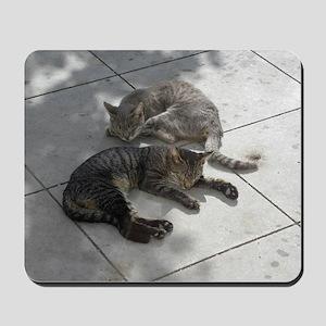 2 Cats Sleeping in Autumn Sunshine 09-22 Mousepad