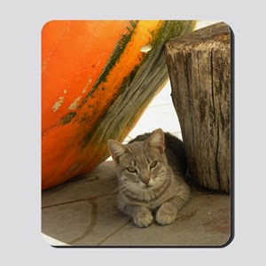 Cat Resting in a Pumpkins Shadow 9-22-09 Mousepad