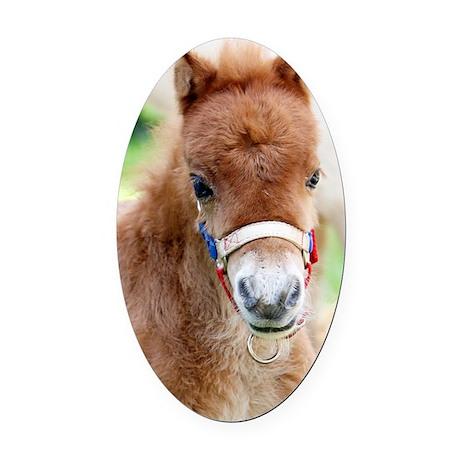 Orphaned Foal - Joy Oval Car Magnet