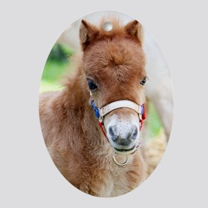 Orphaned Foal - Joy Oval Ornament