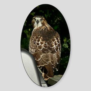 Hawk2.5x3.5 Sticker (Oval)