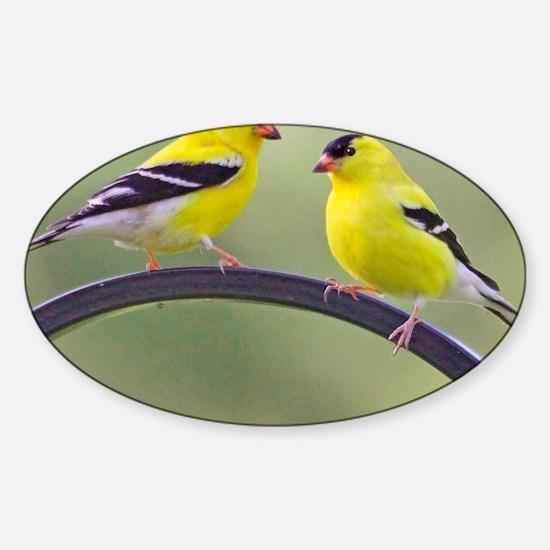 goldfinchSQ Sticker (Oval)
