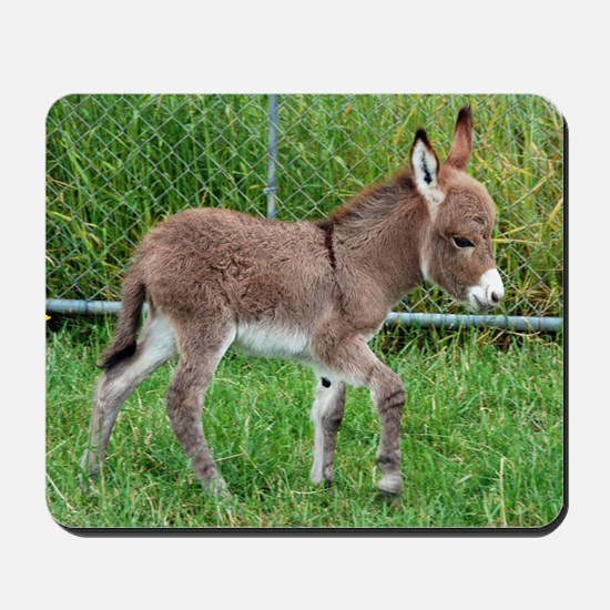Miniature Donkey Foal Mousepad