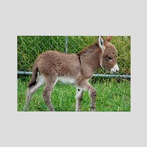 Miniature Donkey Foal Rectangle Magnet