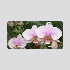 Phal. Melody Aluminum License Plate