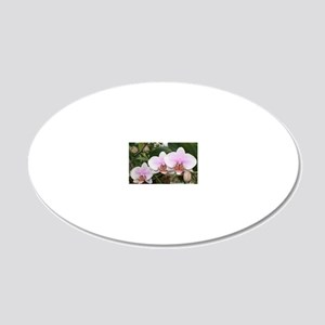 Phal. Melody 20x12 Oval Wall Decal