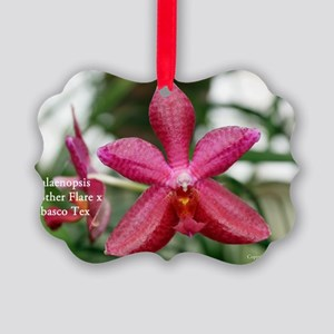 Phal. Brother Flare x Tabasco Tex Picture Ornament