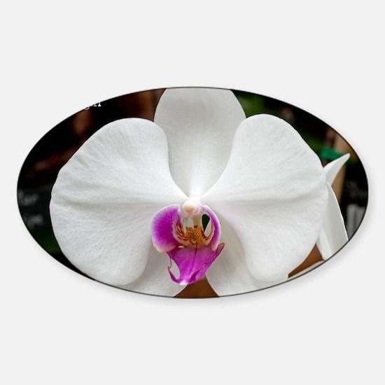 Phal. Tinny Gladgirl Sticker (Oval)