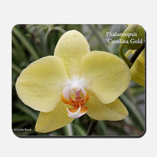 Phal. Carolina Gold Cup Mousepad