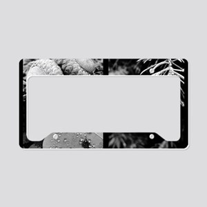 collage b and w green nature License Plate Holder