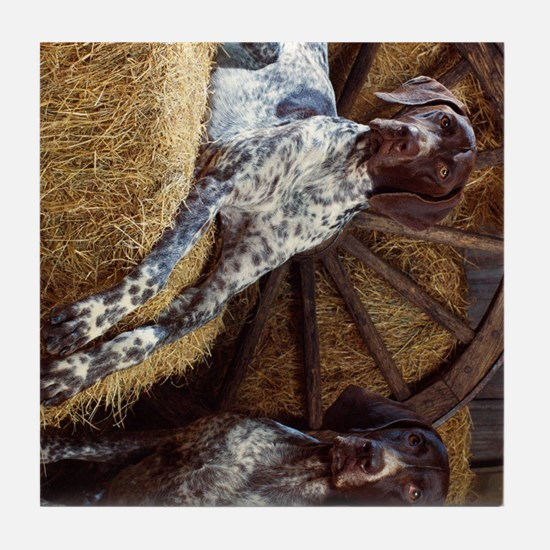 coonhound ipad Tile Coaster
